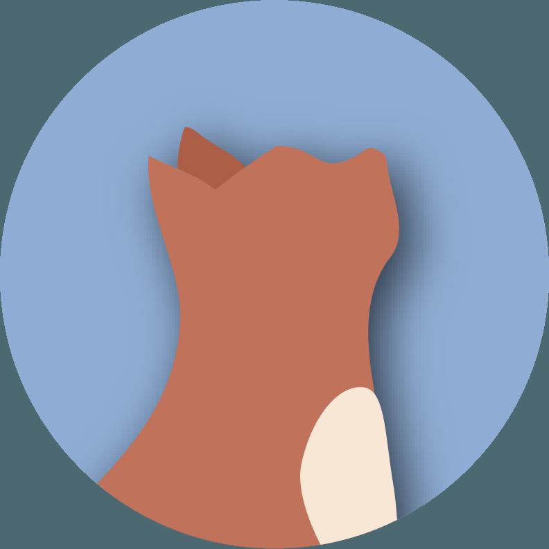 Akute und chronische Schmerzen bei Katzen
